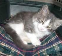 kitten found in Ste Sophie