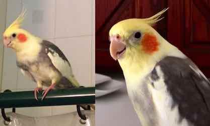 Ptitie Bibitte