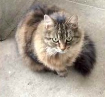 cat found in Fabreville