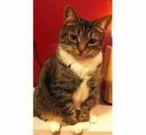 cat lost in Brossard