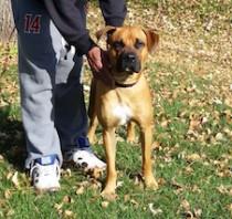 dog found in Pincourt
