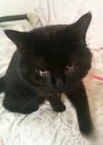 cat found in Ile Perrot
