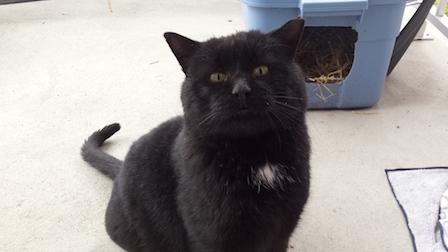 cat found in Les Cèdres