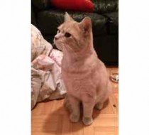 cat found Rosemont or
