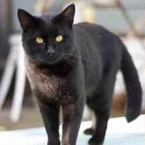 cat lost in St-Paul-de-Joliette