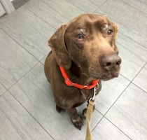 dog found in l'Assomption