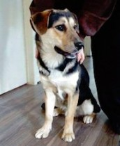 dog found in Mont Tremblant