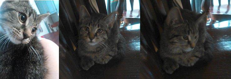 kitten found in Terrebonne
