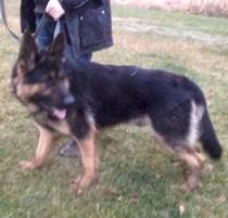 dog found in St Sixte