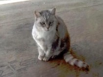 cat found in Noyan