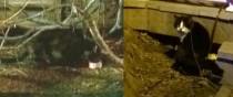 2 cats found in Ste Anne-de-Bellevue