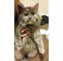 cat found in Aylmer
