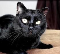 cat found in St Romuald