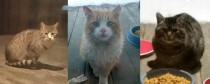 cats found in Montreal North