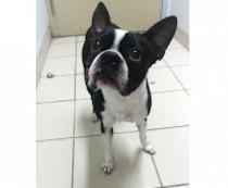 dog found in Anjou