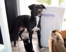 dog lost in St-Eugene-de-Grantham