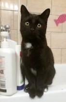 kitten found in Verdun