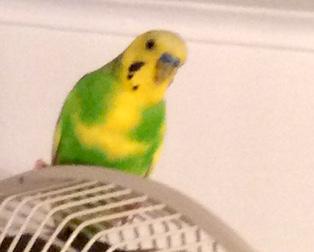 bird found in Rosemont