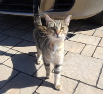 cat found in Brossard