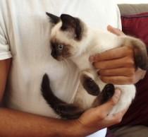 cat found Ville-Marie