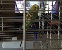 bird found in St-Léonard