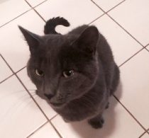 cat found in Boucherville
