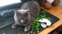 cat found in Trois-Rivières
