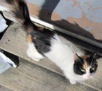 cat found in Ville Emard