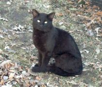cat found in Vimont
