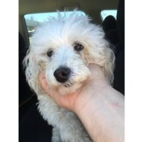 dog found in Laval