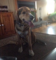 dog found in St Joseph du Lac