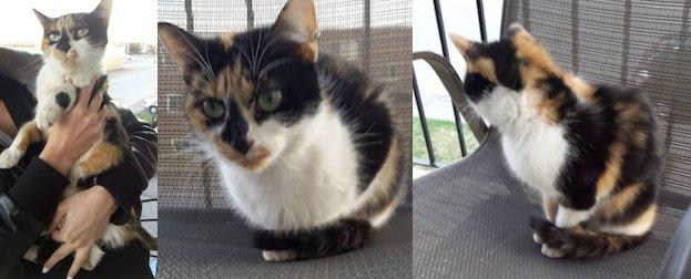 kitten found in St Jerome