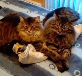 2 cats stolen in Ste Therese