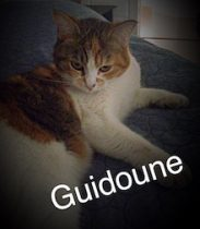Guidoune