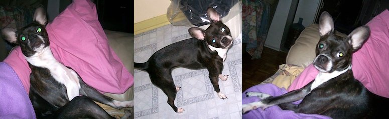dog lost in Ville Marie