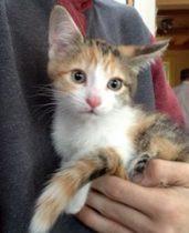 kitten found in St Jean sur Richelieu