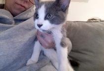 kitten found in Ville Marie