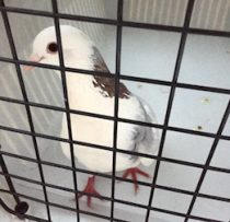 bird found in Chateauguay