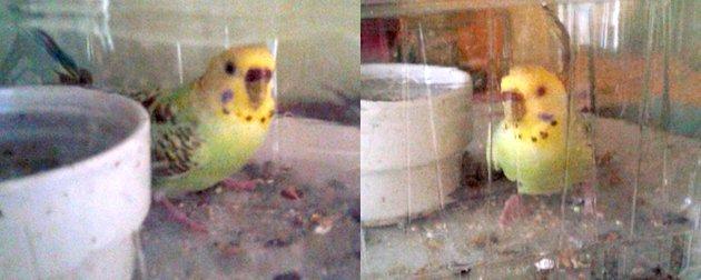 bird found Hochelaga