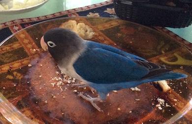 bird found in Pointe Claire