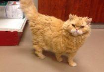 cat found in Ile-Bizard