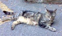 cat found in Laval