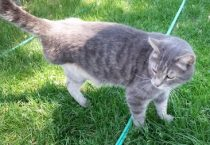 cat found in Lorretteville