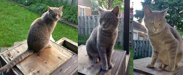 cat found in Montreal North