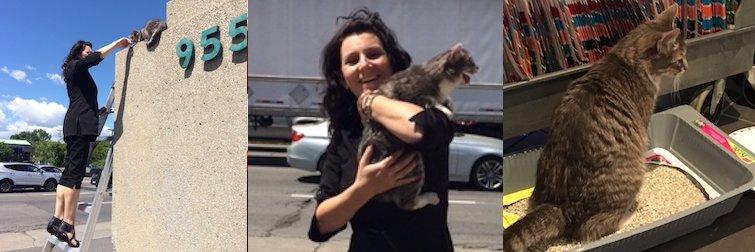 cat found in Pointe Claire