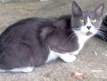 cat found St Lazare