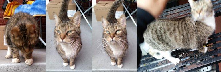 cat found in Ville-Émard