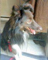 dog found in Gatineau