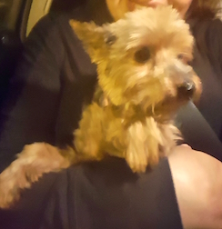 dog lost in the Village