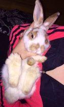 Rabbit lost in Duvernay